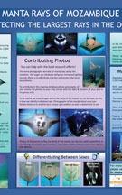 the-dolphin-centre-mozambique-ponta-do-ouro-dolphin-swims-responsible-practice